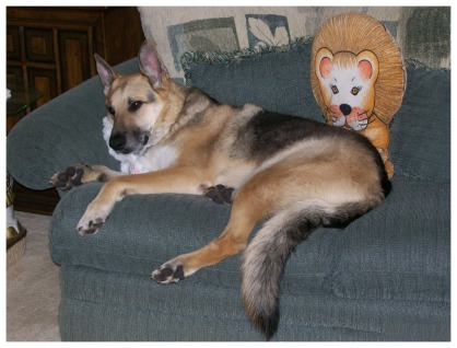 Jerry and soft toy friends on the couch