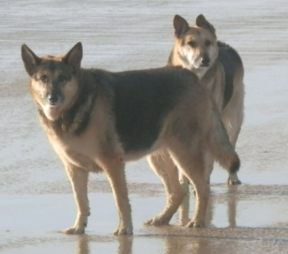 Holly and Jerry Lee on Perranporth Beach, Cornwall